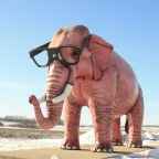 The Pachyderm Perspective